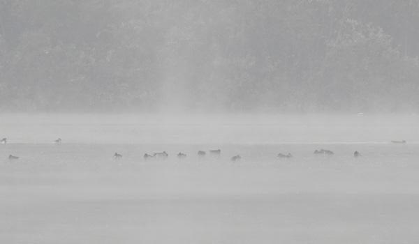 霧の勅使池 2016.11.25