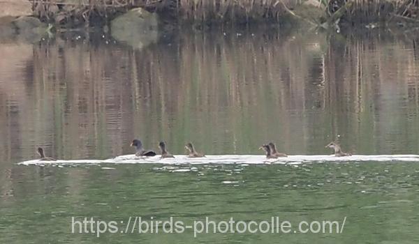 勅使池のバン200604