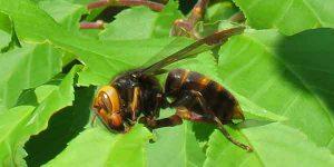勅使公園のスズメバチ