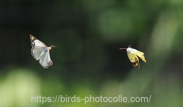 勅使池の昆虫180524