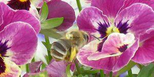 勅使公園のニホンミツバチ