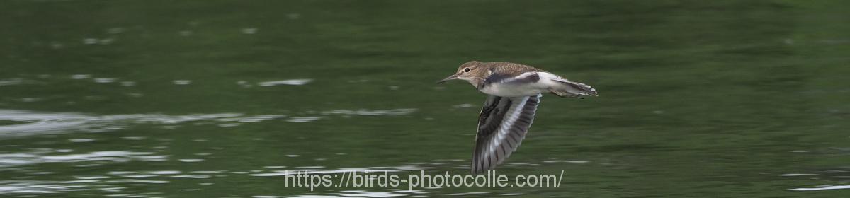 勅使池の野鳥と昆虫